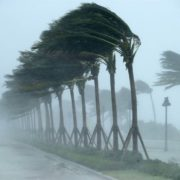 Trees blowing heavily in Hurricane Irma winds